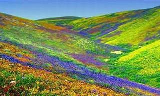 Os Mais Belos Campos Floridos