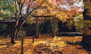 As cores do outono em Kyoto pelas lentes de Yuichi Yokota