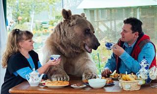 As Aventuras da Família Panteleenko Com Seu Urso de Estimação, Stephen!