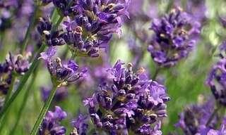 Nove Plantas Para Mandar Mosquitos Embora