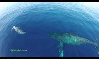 Voando Sobre os Golfinhos