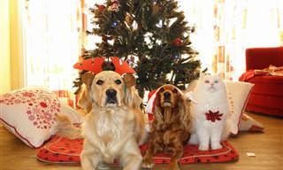 Lindos Cães e Gatinhos Prontos Para o Natal