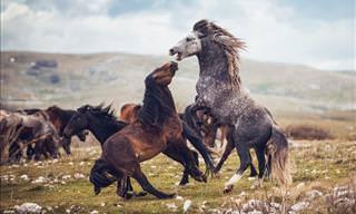 Fotos de Cavalos Selvagens de Tirar o Fôlego!