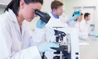 Empresa Suíça Usa Células Humanas Para Combater o Câncer