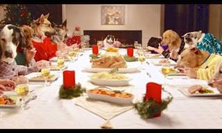 Esse é o vídeo mais divertido do Natal! Uma ceia animal!