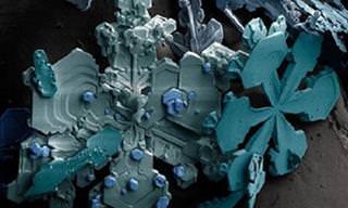 Veja Imagens Impressionantes Pela Lente do Microscópio!
