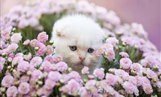 Lindas Coroas de Flores Para Animais de Estimação