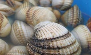 20 Diferentes Tipos de Conchas do Mar e de Água Doce