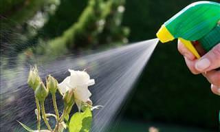 Pesticidas Orgânicos Para o Seu Jardim