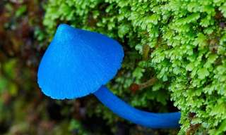 20 Maravilhosas Fotos de Cogumelos