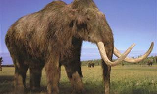 12 Animais Que Podem Deixar de Ser Extintos