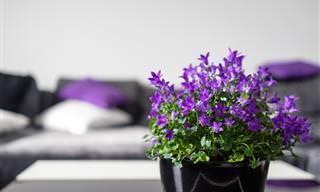 15 Plantas Domésticas Para Todos os Cômodos