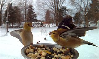 Imagine Ter Esses Lindos Pássaros no Seu Quintal!