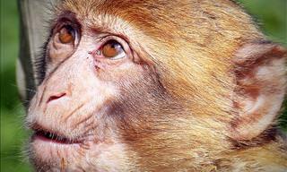 Teste: Estes Fatos Fascinantes Sobre Animais São Verdadeiros ou Falsos?