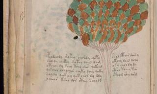 Este manuscrito intriga os cientistas há séculos!