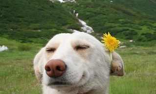 Estes Animais Sabem o Segredo da Felicidade!