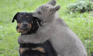 Os Animais São os Melhores Amigos do Mundo Entre Eles!