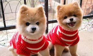 Animais Podem Sim Ter Irmãos Gêmeos!