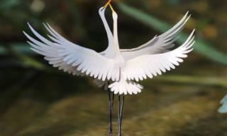 Aves em miniatura feitas de papel - um encanto!