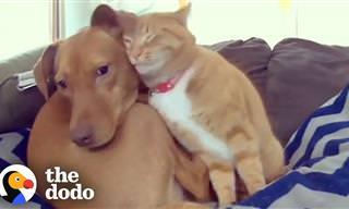 Veja o que esse gato fez pelo seu amigo