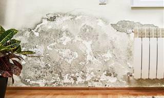 Cuidado Com o Mofo na Sua Casa!