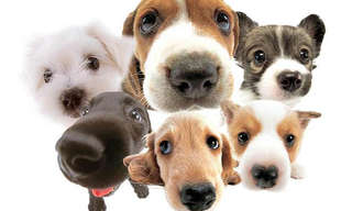 Que Raça de Cão Você Seria?