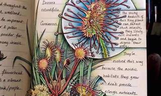 Jo Brown, biológa, ilustradora e grande artista