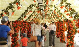 Conheça o Festival das Flores de Campo Maior em Portugal!