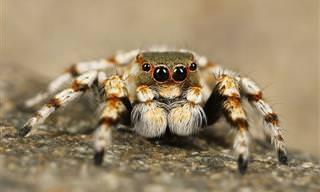 Você Sabia Que As Aranhas Não São Nocivas?