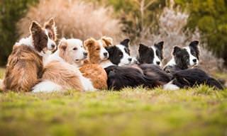 18 Melhores Fotos de Cães de 2018
