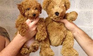 18 Cachorrinhos Extremamente Fofos Para Melhorar Seu Dia