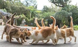 A vida secreta dos gatos de rua no Japão