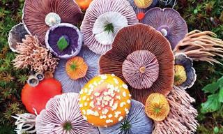 A Beleza dos Cogumelos Selvagens