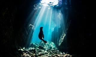 Maravilhas dos oceanos- 14 fotos marinhas premiadas