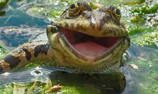 25 Animais Sorridentes Que Vão Alegrar o Seu Dia!