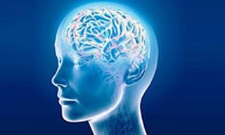15 Fatos Curiosos Sobre Como Funciona o Cérebro