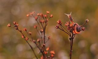 O mundo mágico e colorido dos caracóis
