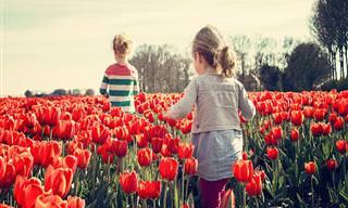 10 Exemplos Incríveis do Vermelho na Natureza