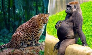 Alguns animais antes de dar à luz são assim