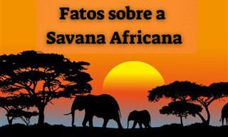 7 fatos intrigantes sobre a savana africana