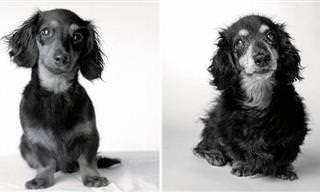 Antes e Depois de Animais de Estimação em Fotos