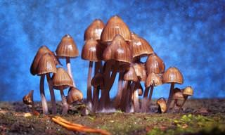 Cogumelos 'Mágicos' Podem Suavizar os Sintomas da Depressão