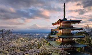 16 Motivos Para Nunca Visitar o Japão