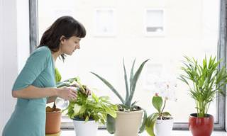 Como Aumentar a Umidade Para Suas Plantas
