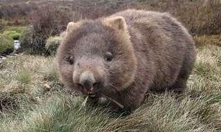 A Fascinante Fauna da Austrália!