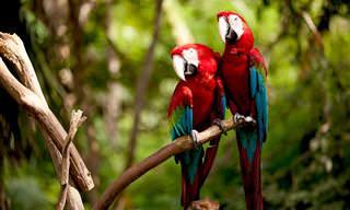 A Amazônia em imagens de tirar o fôlego!