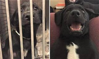 13 Fotos de Animais Antes e Depois da Adoção