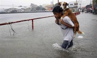 Quando Boas Pessoas Salvam Animais...