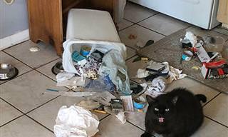 15 Vezes em que os gatos foram flagrados sendo... gatos!