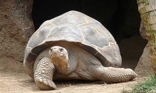 Para Se Divertir: As Tartarugas Vão Acampar...